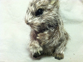 Gray Squirrel w/ fluffy tail Animal Figurine - recycled rabbit fur image 6