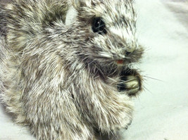 Gray Squirrel w/ fluffy tail Animal Figurine - recycled rabbit fur image 7