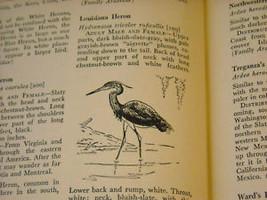 Illustrated Encyclopedia of American Birds 1944 1st ed image 8