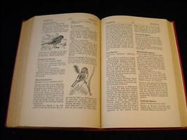 Illustrated Encyclopedia of American Birds 1944 1st ed image 10