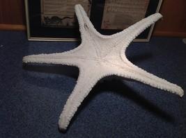 Large White Resin Handmade Sea Star Wall Ornament Starfish image 5