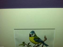 """Print Pair of Blue Tits """"The Most Beautiful Birds"""" Framed Wall Art image 2"""