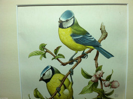 """Print Pair of Blue Tits """"The Most Beautiful Birds"""" Framed Wall Art image 3"""