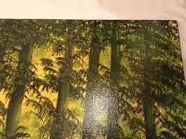 Painting Original Green Forest Vivian Gaines Tanner Hudson Valley Artist image 5