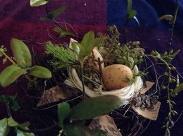Realistic looking nest with greens and eggs spring display or teacher tool image 6