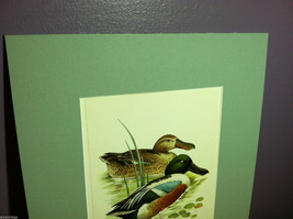 "Print of Northern Shoveler Duck from ""The Most Beautiful Birds"" Framed Wall Art image 2"