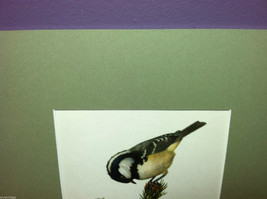 """Print of Coal Tit/Parus Ater """"The Most Beautiful Birds"""" Framed Wall Art image 2"""
