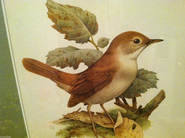 Print of Nightingale from The Most Beautiful Birds Framed Wall Art - Italy 1960 image 2