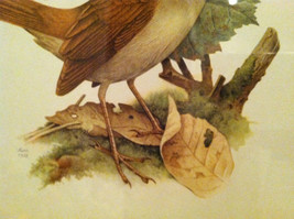 Print of Nightingale from The Most Beautiful Birds Framed Wall Art - Italy 1960 image 3