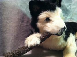 Siberian Husky chewing on stick - Dog Figurine - recycled rabbit fur image 3