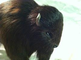 Wild Black Buffalo Animal Figurine - recycled rabbit fur image 2