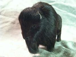 Wild Black Buffalo Animal Figurine - recycled rabbit fur image 4