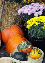 Fall notecards - Halloween cards, Thanksgiving cards - $30.00