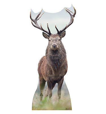 Primary image for BULL ELK DEER ANIMAL LIFESIZE CARDBOARD STANDUP STANDEE CUTOUT PROP 1817