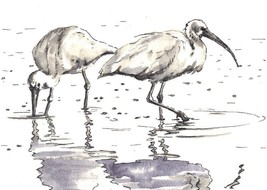 "Akimova: POND BIRDS, watercolor, black&white, ink, pen, 7""x5.5"" - $13.00"