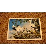 New Born Stork Congratulations Postcard Newborn... - $4.50