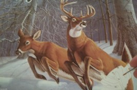 WHITE TAILS  PAINT BY NUMBERS KIT BY ROYAL & LANGNICKEL 15 X 11 - $18.00