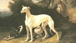Greyhound Dog Magnet #4 - $6.99