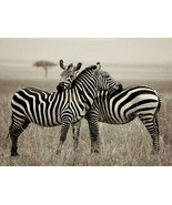 Zebras back to back clip art thumbtall