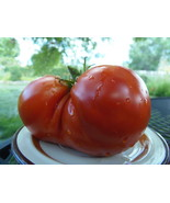 Sleeping Giant, a deep red heart-shaped tomato - J&L Gardens bred - $5.00