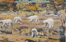 St Louis Missouri MO Polar Bears at the Zoo Postcard Linen Colourpicture - $3.34