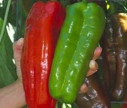 100 Giant pepper seeds Marconi Peppers -DIY Home Garden Vegetable Plant ... - $2.16