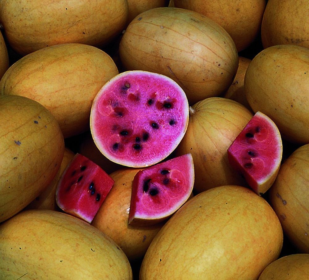 Golden midget melon seed