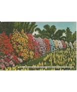 Postcard Vintage Sweet Peas Flowers Lake Eola Orlando Collectible Unpost... - $10.00