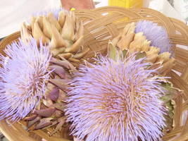 SHIPPED FROM US 150 Green Globe Artichoke Cynara Scolymus Vegetable Seed... - $19.00