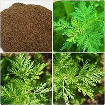 Chinese Wormwood Seeds, Sweet Annie (Artemisia annua) 200pcs Rare Medici... - $8.91