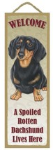 """Spoiled Rotten Dachshund Black/Tan Lives Here Sign 5"""" x 15"""" Plaque Gift ... - $13.98"""