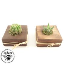 5 Organic Natural Charred Wood Block Planter - Succulent, Cactus, Hawort... - $20.00