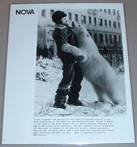 WRANGEL ISLAND POLAR BEAR & YURI LEDIN - PBS TV Photo - $14.95