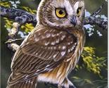Saw whet owl 9593 thumb155 crop