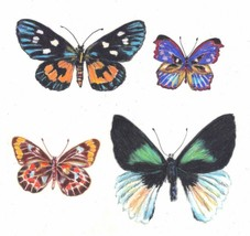 Akimova:  BUTTERFLYS, colored pencils,still life, green - $13.00