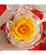 RoseStory®|Exquisite Single Preserved Yellow Rose Terrarium|Terrarium Pl... - $55.00