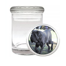 Dog Mastiff Neapolitan01 Odorless Air Tight Medical Glass Jar - $11.41