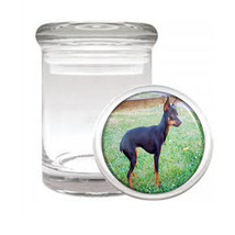 Dog miniature pincher 01 Odorless Air Tight Medical Glass Jar - $11.41