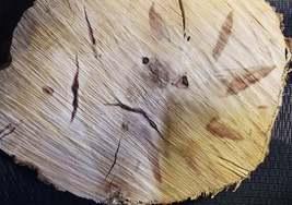 Box Elder/Ash Leaf Maple Wood slab image 6