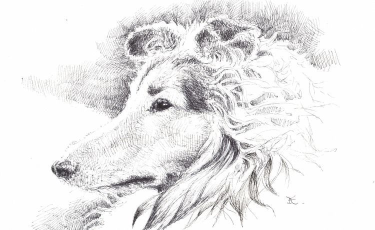 "Akimova: COLLIE, black&white, ink, pen, 8""x5"""