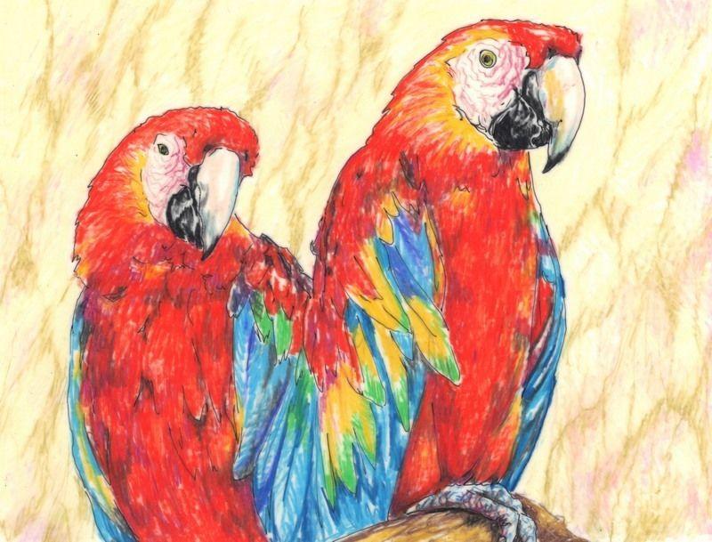 "Akimova:  PARROTS, colored pencils,birds, green, red,  6.75""x5.25"""