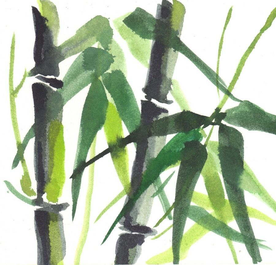 "Akimova:BAMBOO ,tree, watercolor and pencils,garden, 6""x5.5"""