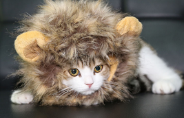 Fancy Pet Costume Cute Lion Mane Cat Hat Wig Cosplay Stuffed Plush Face ... - €9,33 EUR