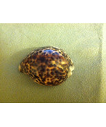 Beautiful Helmut Conch Seashell Leopard Spotted - $9.99