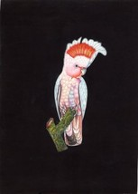 Major Mitchell Cockatoo Bird Painting Hand Painted Indian Miniature Natu... - $79.98