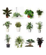 "Combo of 4 Best Air Clean Live Plants Fit 4"" Pot Clean Air Plants for Yo... - $12.99"