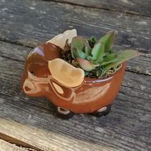 "Kalanchoe Succulent in Ceramic Moose Planter, 5"" Brown, Animal Pot, Deer Elk image 2"