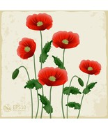 Red Poppies on a White Background Vector-Digita... - $3.00