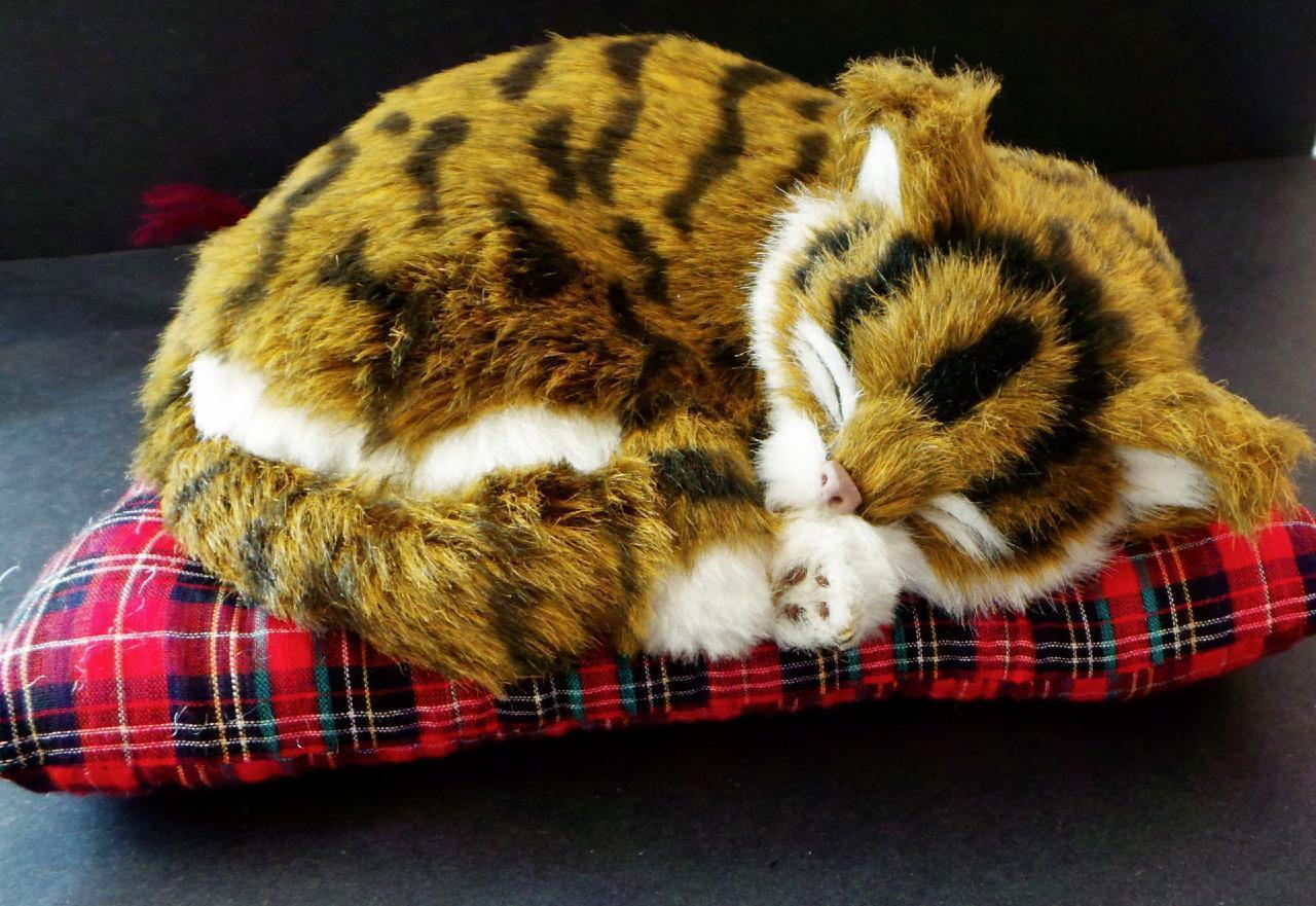 Cat on a red pillow kitty napping on a pillow decorative collectible looks real