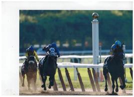 American Pharoah Belmont 2015 Triple Crown Vintage 16X20  Color Memorabi... - $29.95